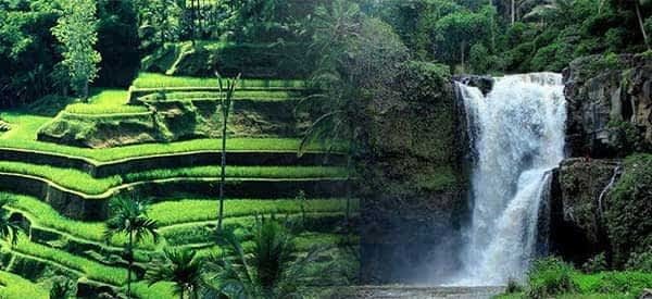 Read more about the article Tegalalang Half Day Tour