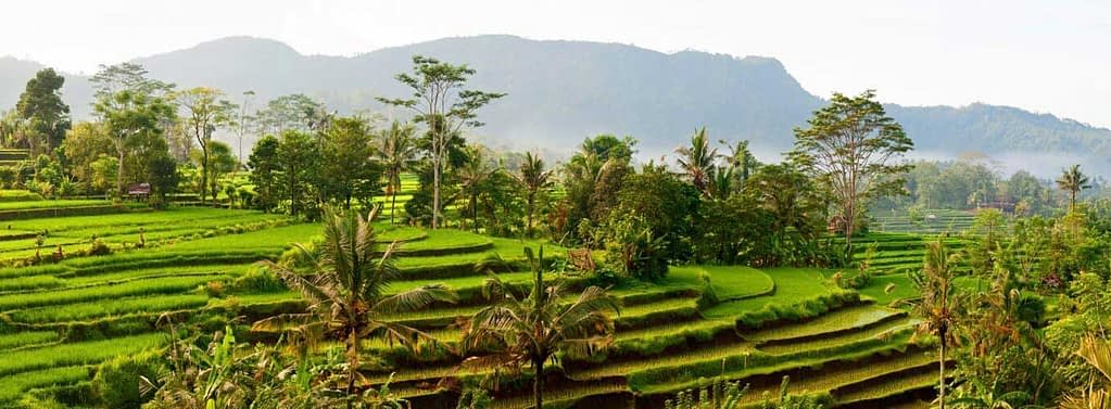 Why Come to Bali
