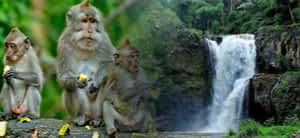 Read more about the article Ubud Half Day Tour