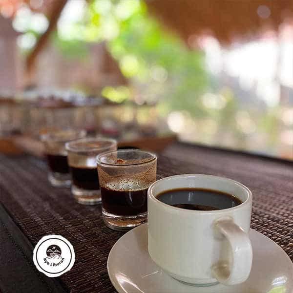 Luwak-Coffee-Tester