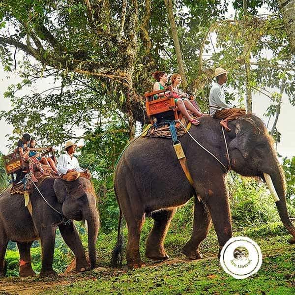 Wisata-Naik-Gajah